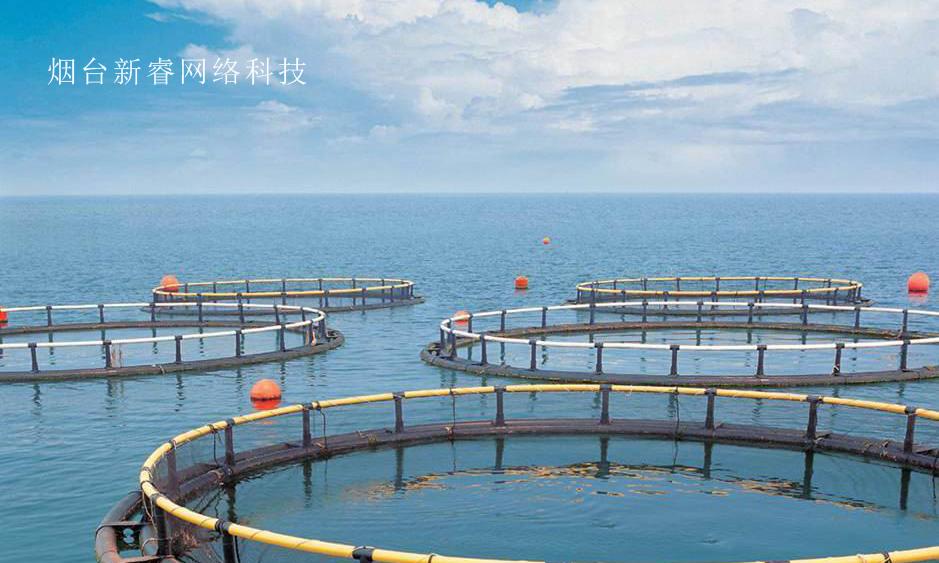 烟台畜牧养殖APP带动产业发展